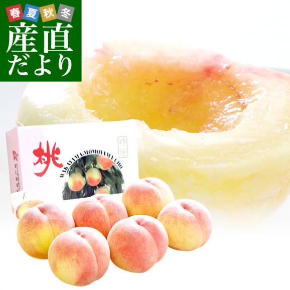 和歌山県より産地直送 JA紀の里 あら川の桃 赤秀品 1.8キロ (6玉から8玉) 送料無料 桃 もも あらかわ01