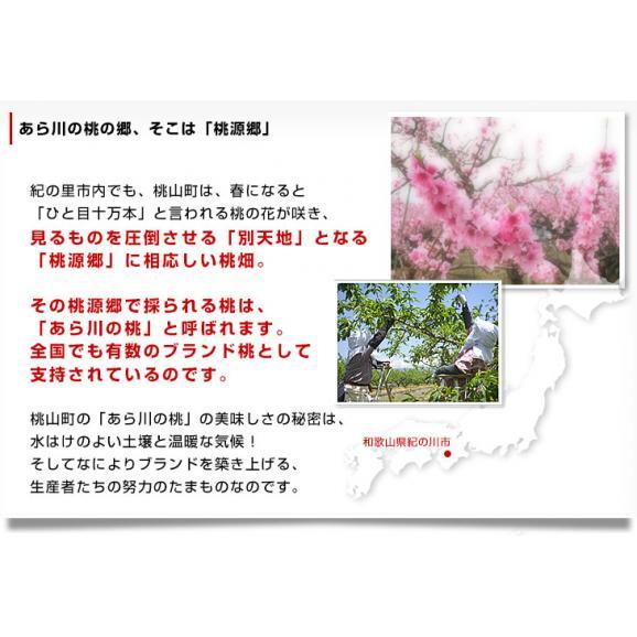 和歌山県より産地直送 JA紀の里 あら川の桃 赤秀品 1.8キロ (6玉から8玉) 送料無料 桃 もも あらかわ04