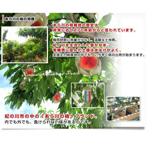 和歌山県より産地直送 JA紀の里 あら川の桃 赤秀品 1.8キロ (6玉から8玉) 送料無料 桃 もも あらかわ05