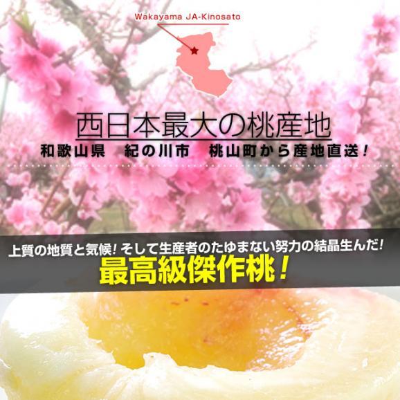 和歌山県より産地直送 JA紀の里 あら川の桃 赤秀品 1.8キロ (6玉から8玉) 送料無料 桃 もも あらかわ06