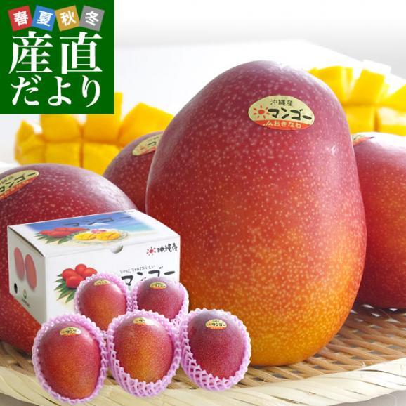 沖縄県より産地直送 JAおきなわ 完熟マンゴー 秀品 1.5キロ (4玉から5玉入り) 送料無料 まんごー アップルマンゴー 沖縄マンゴー01
