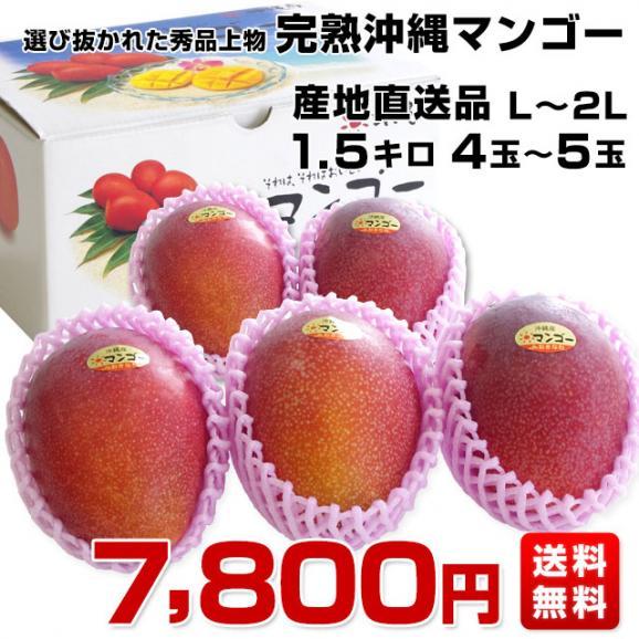 沖縄県より産地直送 JAおきなわ 完熟マンゴー 秀品 1.5キロ (4玉から5玉入り) 送料無料 まんごー アップルマンゴー 沖縄マンゴー03