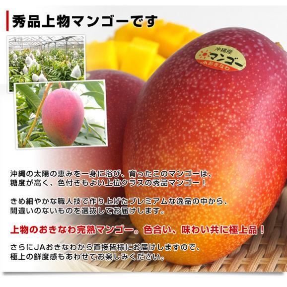 沖縄県より産地直送 JAおきなわ 完熟マンゴー 秀品 1.5キロ (4玉から5玉入り) 送料無料 まんごー アップルマンゴー 沖縄マンゴー04