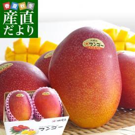 沖縄県より産地直送 JAおきなわ 完熟マンゴー 秀品 2Lサイズ×2玉 合計700g (約350g×2玉) 送料無料 まんごー アップルマンゴー 沖縄マンゴー