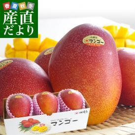 送料無料 沖縄県より産地直送 JAおきなわ 完熟マンゴー 秀品 Lサイズ×3玉  合計 900g (約300g×3玉)
