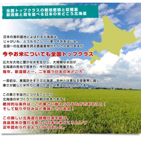 令和元年産 <特A> 北海道産 ななつぼし 5キロ お米 北海道米 送料無料05