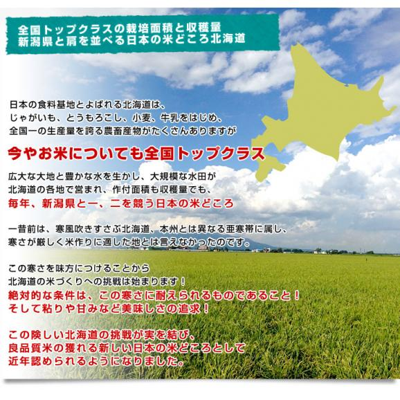 令和2年産 <特A> 北海道産 ななつぼし 5キロ お米 北海道米 送料無料05