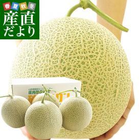 日本三大砂丘の地「そでうら」で作られた超特大メロン!
