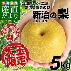 茨城県 JA土浦 新治梨部会の梨 超大玉限定5キロ(7玉から12玉)