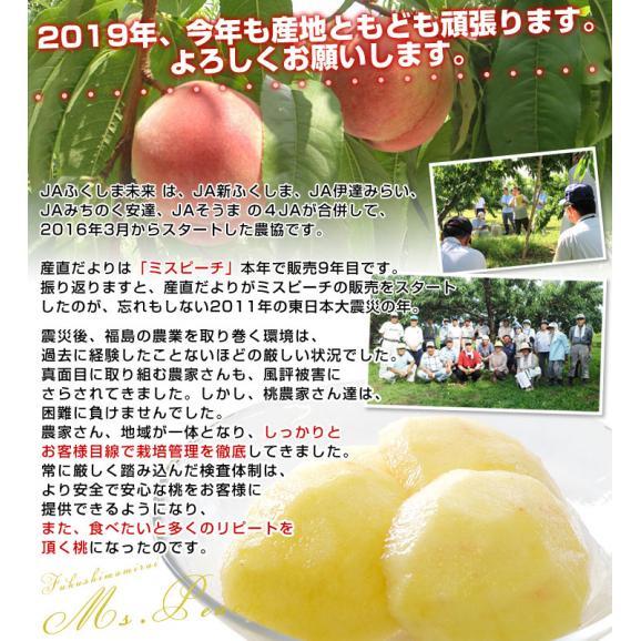 福島県より産地直送 JAふくしま未来 ミスピーチ「黄金桃」 約2キロ(5玉から8玉) 桃 もも 送料無料04