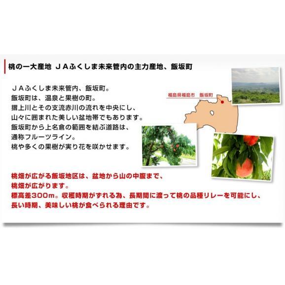 福島県より産地直送 JAふくしま未来 ミスピーチ「黄金桃」 約2キロ(5玉から8玉) 桃 もも 送料無料05
