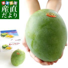沖縄県より産地直送 JAおきなわ キーツマンゴー 約800g 化粧箱 まんごー 送料無料