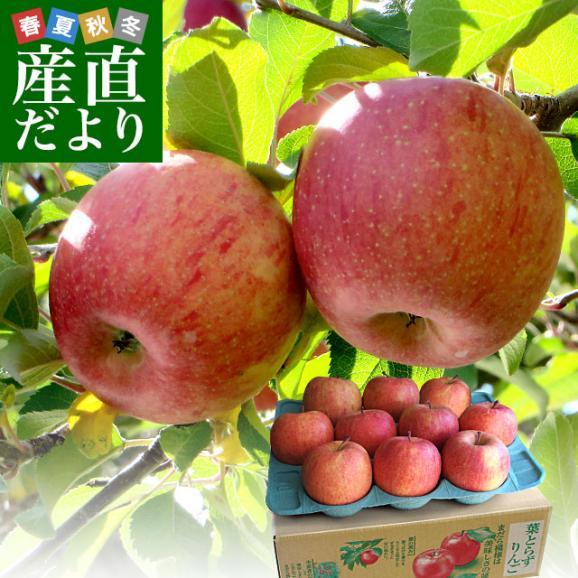 お一人様2箱まで! 送料無料 青森県より産地直送 JAつがる弘前 葉とらず太陽ふじりんご 3キロ(9玉から13玉) 糖度13度以上 林檎 リンゴ01
