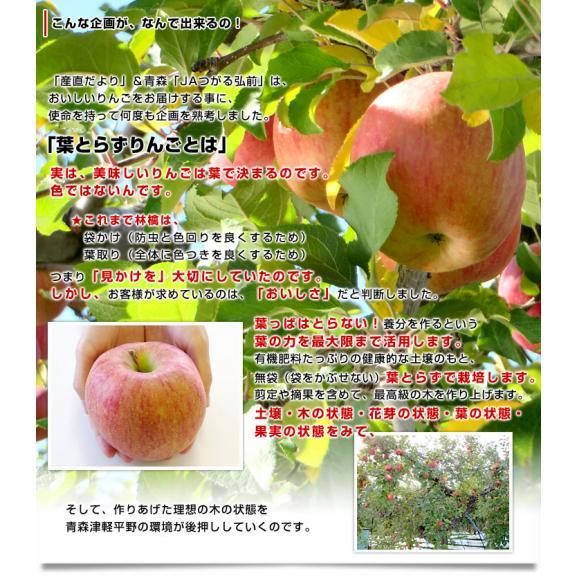 青森県より産地直送 JAつがる弘前 葉とらず太陽ふじりんご 3キロ(9玉から13玉) 糖度13度以上 林檎 リンゴ 送料無料04