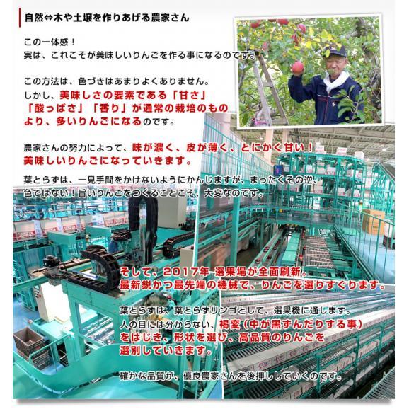 青森県より産地直送 JAつがる弘前 葉とらず太陽ふじりんご 3キロ(9玉から13玉) 糖度13度以上 林檎 リンゴ 送料無料05