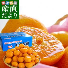 送料無料 愛媛県より産地直送 JAにしうわ 日の丸みかん ガキ大将 LからMサイズ 5キロ(40玉から50玉) 蜜柑 ミカン