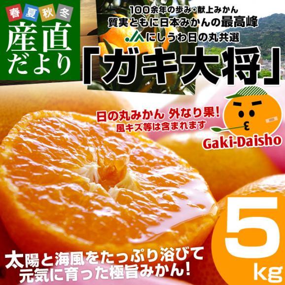 愛媛県より産地直送 JAにしうわ 日の丸みかん ガキ大将 LからMサイズ 5キロ(40玉から50玉) 送料無料   蜜柑 ミカン02