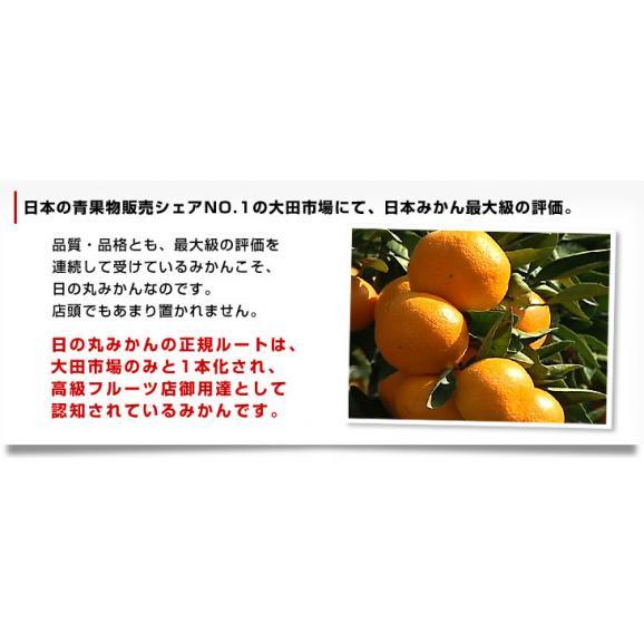 愛媛県より産地直送 JAにしうわ 日の丸みかん ガキ大将 LからMサイズ 5キロ(40玉から50玉) 送料無料   蜜柑 ミカン04