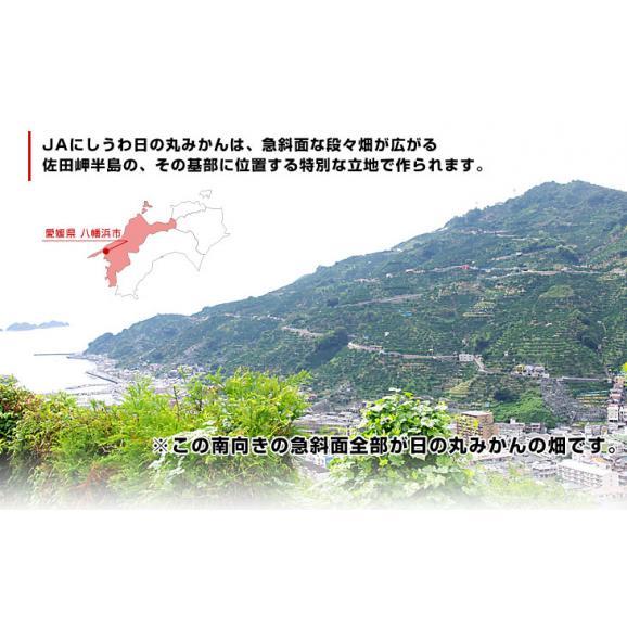 送料無料 愛媛県より産地直送 JAにしうわ 日の丸みかん ガキ大将 LからMサイズ 5キロ(40玉から50玉) 蜜柑 ミカン06