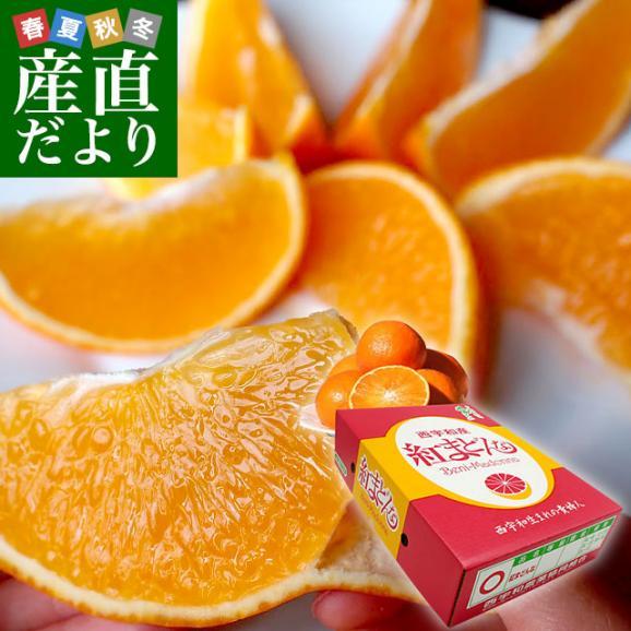 送料無料 愛媛県より産地直送 JAにしうわ 紅まどんな 2LからLサイズ 3キロ(12玉から15玉) オレンジ おれんじ お歳暮 御歳暮01