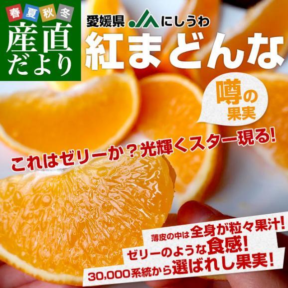 愛媛県より産地直送 JAにしうわ 紅まどんな 2LからLサイズ 3キロ(12玉から15玉) オレンジ おれんじ  送料無料 お歳暮 御歳暮02