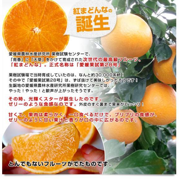 愛媛県より産地直送 JAにしうわ 紅まどんな 2LからLサイズ 3キロ(12玉から15玉) オレンジ おれんじ  送料無料 お歳暮 御歳暮04
