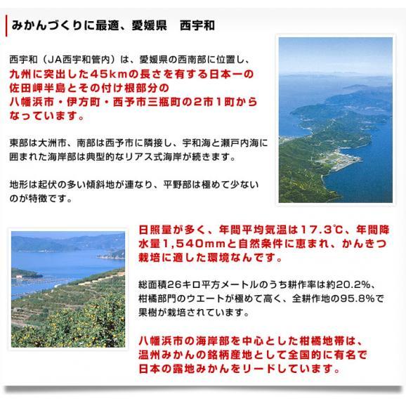 愛媛県より産地直送 JAにしうわ 紅まどんな 2LからLサイズ 3キロ(12玉から15玉) オレンジ おれんじ  送料無料 お歳暮 御歳暮05