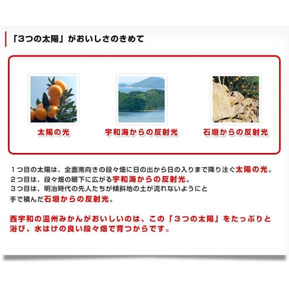 送料無料 愛媛県より産地直送 JAにしうわ 紅まどんな 2LからLサイズ 3キロ(12玉から15玉) オレンジ おれんじ お歳暮 御歳暮06