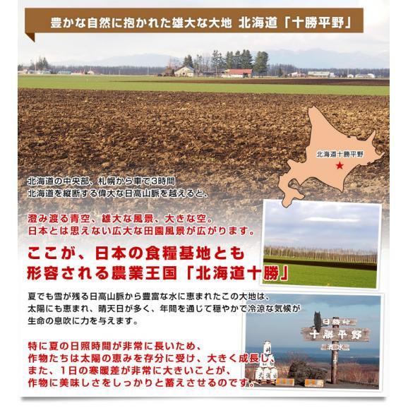 北海道より産地直送 北海道十勝産 じゃがいもメークイン 大小込 約10キロ めーくいん 送料無料05