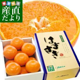 佐賀県より産地直送 JAからつ はまさき 秀品 LからSサイズ 約2.5キロ (12から18玉前後) 唐津 浜崎 柑橘 オレンジ 送料無料