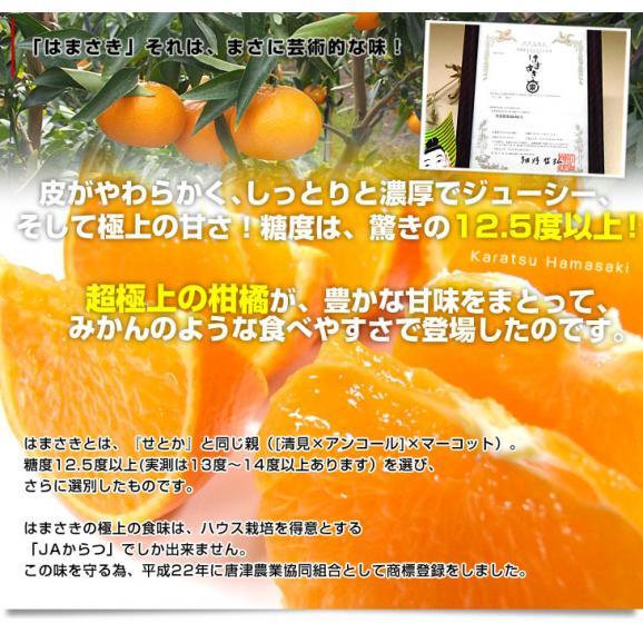 佐賀県より産地直送 JAからつ はまさき 秀品 LからSサイズ 約2.5キロ (12から18玉前後) 送料無料 唐津 浜崎04