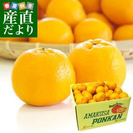 熊本県から産地直送 JAあまくさ 天草ポンカン 2LからMサイズ 10キロ (65玉から96玉前後) 柑橘 ぽんかん 送料無料