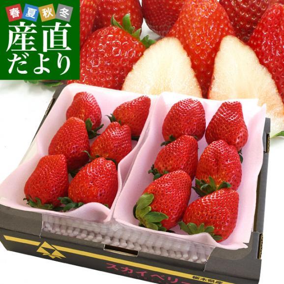 栃木県より産地直送 JAおやま スカイベリー 約300g×2P(6から12粒×2P)いちご イチゴ 苺  ※クール便発送 送料無料01