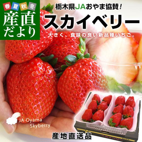 栃木県より産地直送 JAおやま スカイベリー 約300g×2P(6から12粒×2P)いちご イチゴ 苺  ※クール便発送 送料無料02
