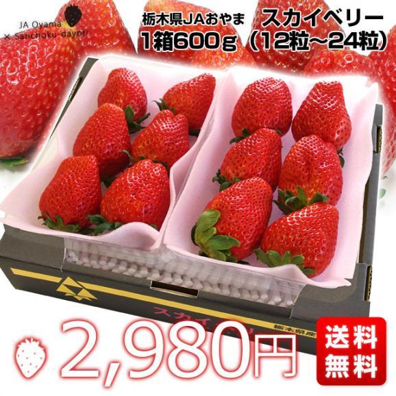 栃木県より産地直送 JAおやま スカイベリー 約300g×2P(6から12粒×2P)いちご イチゴ 苺  ※クール便発送 送料無料03