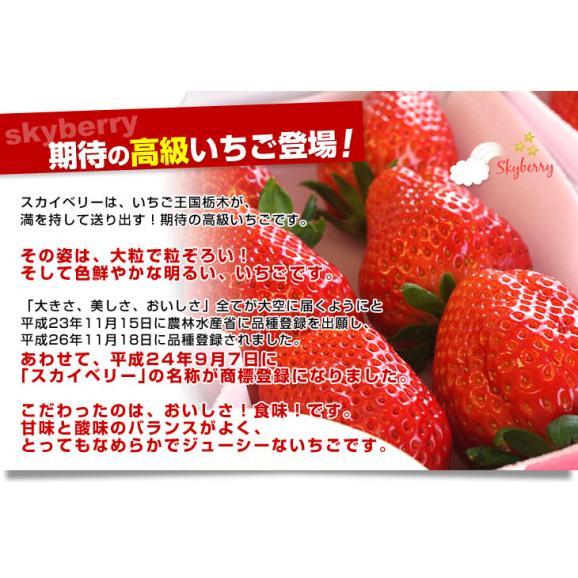 栃木県より産地直送 JAおやま スカイベリー 約300g×2P(6から12粒×2P)いちご イチゴ 苺  ※クール便発送 送料無料04