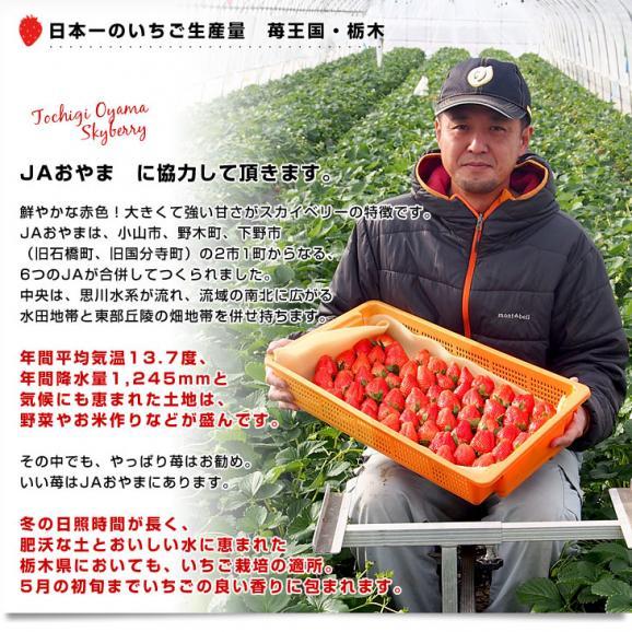 栃木県より産地直送 JAおやま スカイベリー 約300g×2P(6から12粒×2P)いちご イチゴ 苺  ※クール便発送 送料無料05