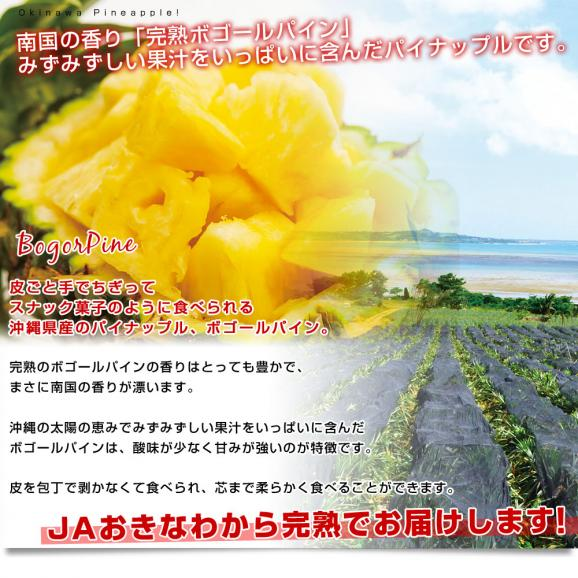 沖縄県より産地直送 JAおきなわ 石垣島産 ボゴールパイン 2玉セット 合計2.4キロ前後 (1.2キロ×2玉) 送料無料 沖縄パイン パイナップル パインアップル いしがきじま04