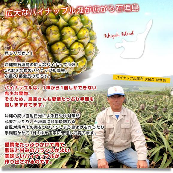 沖縄県より産地直送 JAおきなわ 石垣島産 ボゴールパイン 2玉セット 合計2.4キロ前後 (1.2キロ×2玉) 送料無料 沖縄パイン パイナップル パインアップル いしがきじま06