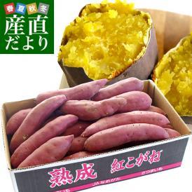 送料無料 茨城県より産地直送 JAなめがたしおさい さつまいも「熟成紅こがね」 Mサイズ 約5キロ(18本前後)
