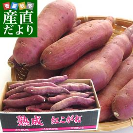 送料無料 茨城県より産地直送 JAなめがた さつまいも「熟成紅こがね」 Sサイズ 約5キロ(25本から30本)