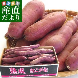 送料無料 茨城県より産地直送 JAなめがたしおさい さつまいも「熟成紅こがね」 Sサイズ 約5キロ(25本から30本)