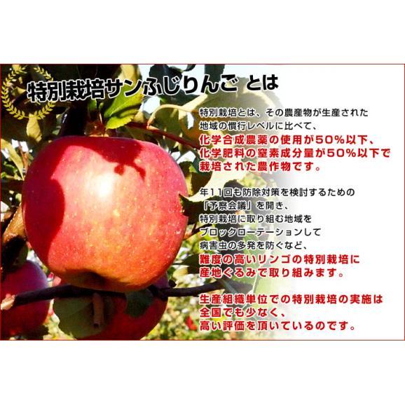 岩手県より産地直送 JAいわて中央 プレミアム サンふじりんご 特秀品 5キロ(14玉から18玉) 林檎 リンゴ  送料無料06