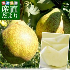 トロ〜リとろける洋なしの美味しさは絶品!香りよく、甘味豊かな洋梨です!