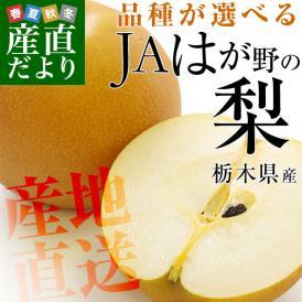 栃木産 JAはが野の梨(大玉限定)優品以上 5キロ(8玉から10玉)