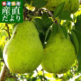 岩手県より産地直送 JAいわて中央 洋梨 バラード 5キロ(12玉から16玉) なし ナシ 送料無料