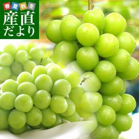 送料無料 岡山県より産地直送 JAつやま シャインマスカット 秀品 2キロ(3房から5房) ブドウ 葡萄 ぶどう
