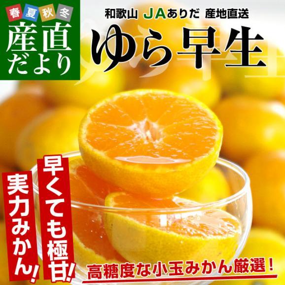 送料無料 和歌山県より産地直送 JAありだ ゆら早生みかん 5キロ SからSSサイズ 蜜柑 ミカン02