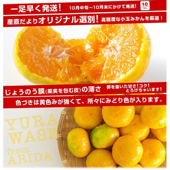 和歌山県より産地直送 JAありだ ゆら早生みかん 5キロ SからSSサイズ 蜜柑 ミカン 送料無料04