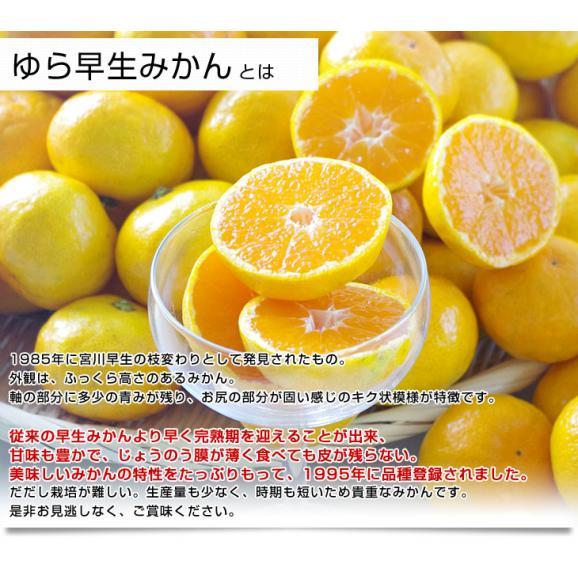 和歌山県より産地直送 JAありだ ゆら早生みかん 5キロ SからSSサイズ 蜜柑 ミカン 送料無料05